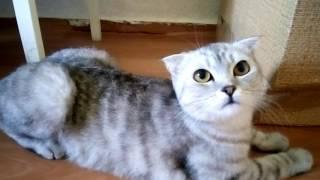 Моя кошка просит Кота)))