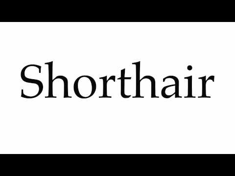 How to Pronounce Shorthair