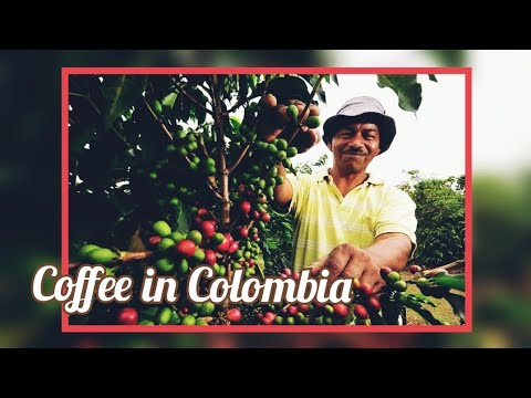 Coffee in Colombia | From Bean to Cup | Learn Everything About Coffee | Auroras Eye Films