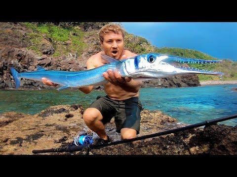 Freakishly Big Fish SOLO In Japan