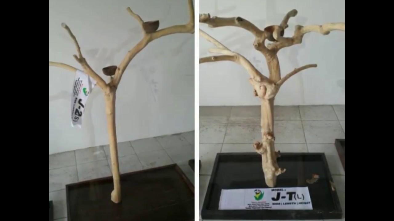 Java Wood Tree Play Stand Javawood Coffee Tree Bird Perch