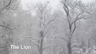 Spring Snow 2018
