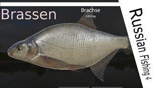 Russian Fishing 4 - # 44 - Brachsen am großen Strom