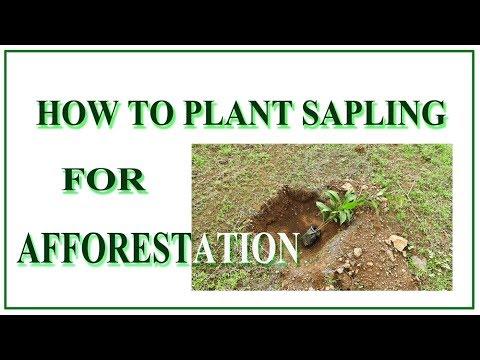 How To Plant Sapling For Afforestation-Hariyali Demo 1