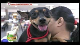 AGRITV February 26, 2017 Ep Happy Pets 101 Canine Heartworm FMH Animal Vet