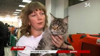 На выставке кошек представили «резиновых» котов