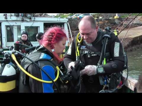 Scuba Diving at St Abbs in Scotland