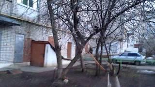 7 котов и одна кошка на дереве делают котят