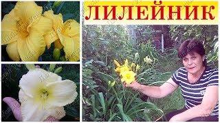 видео Лилии посадка и уход в открытом грунте подкормка размножение