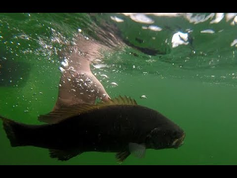 Walleye And Bass Fishing On Green Lake!