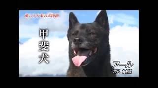 Rは最初の甲斐犬の紹介のカットと最後の3頭目の甲斐犬の紹介に登場します。