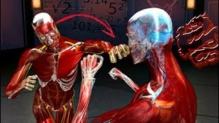 Fight Science - The Human Weapon Most Deadly Fighting Styles: Wing Chun, Jeet Kune Do, BJJ
