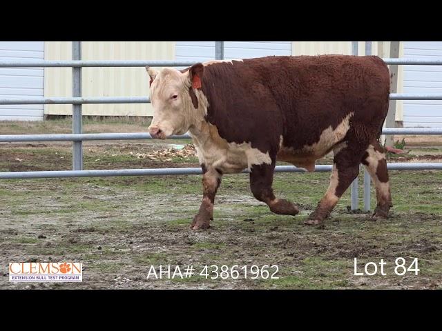 Clemson Extension Bull Test Lot 84