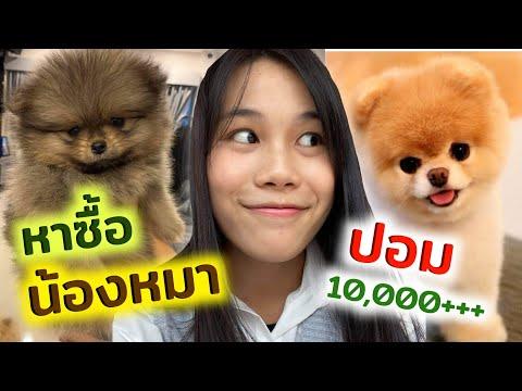หาซื้อลูกหมาปอมทีคัพ น่ารักมากกก!!!!