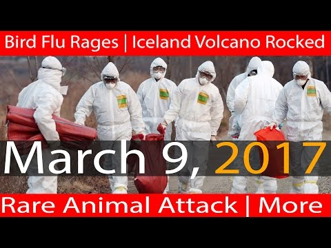 03/09/2017 | Bird Flu Pandemic | Iceland Volcano Earthquakes | Rare Animal Attack