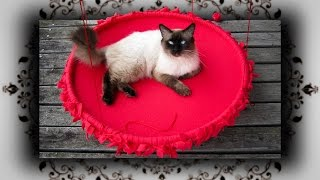 DIY 😻 Hula Hoop Outdoor Knoten Schaukel für Katzen | no sew Cat swing