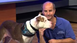 Pets on Parade - 3/19/16 - Adoptable pets (part 4)