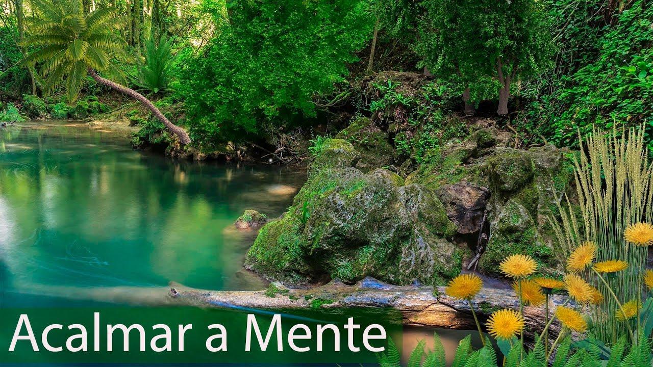 Musica para Alívio , Stress e Ansiedade - Relaxar com Música e Sons da Natureza - Meditação para Aca