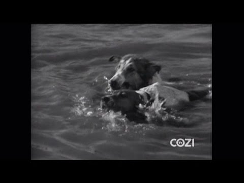 "Download Lassie - Episode #261 - ""The Winner"" - Season 8 Ep. 6 - 10/15/1961"