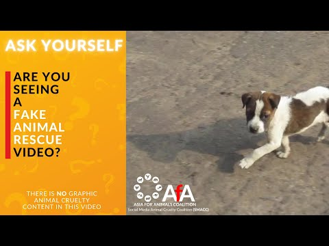 ASK YOURSELF - is it a fake rescue video?