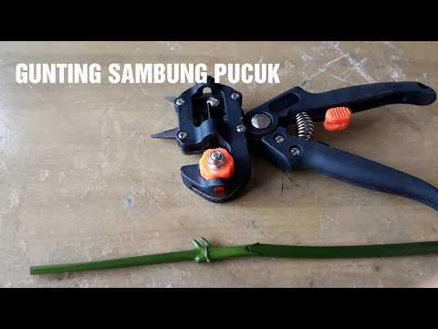 Grafting Tool : Demo Gunting Sambung Pucuk Tanaman