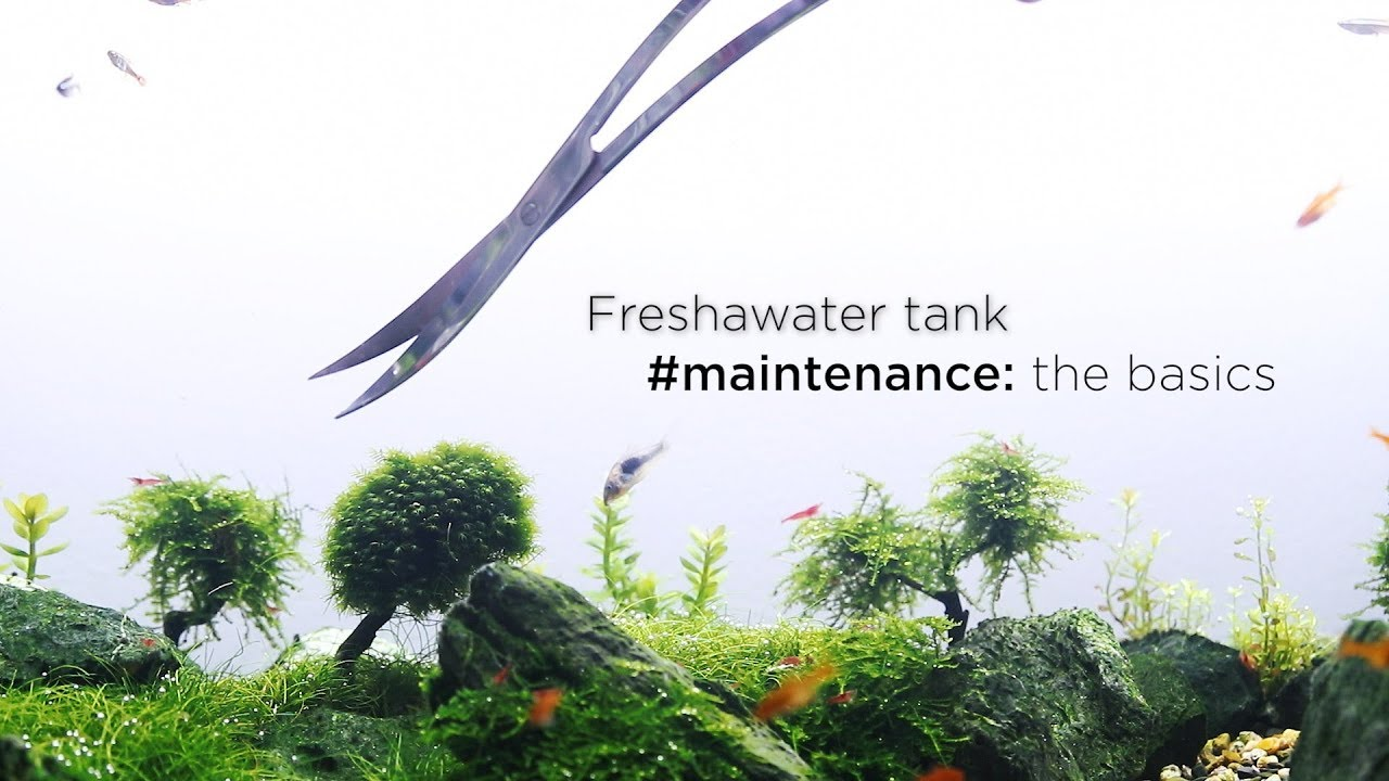 Freshwater aquarium maintenance: BASIC AQUASCAPING TIPS ...