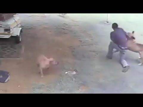 LiveLeak - Dog Attacks Intruder / Burglar