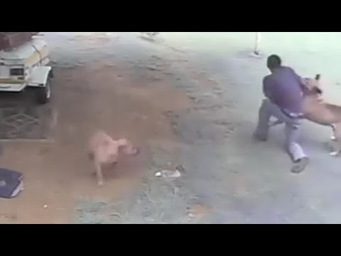 LiveLeak - Dog Attacks Intruder / Burglar