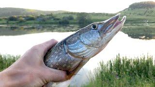 Ловля ЩУКИ в деревенском пруду на спиннинг Рыбалка