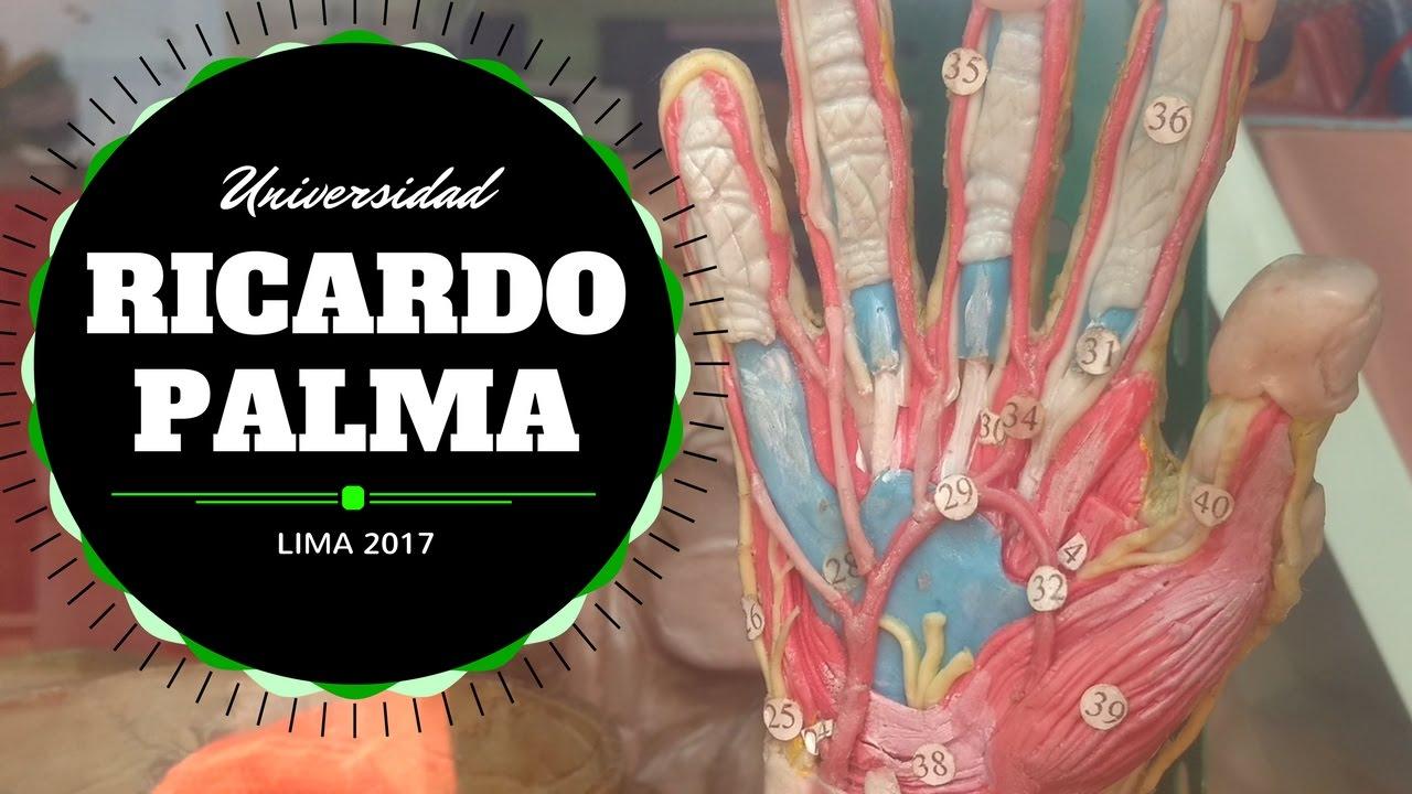Experiencia Universidad Ricardo Palma (Parte 6) - Anfiteatro de ...