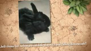Intro kanau Krlik TV