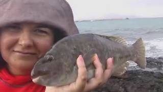 Pesca de la Vieja en Canarias; Fishing for Parrotfish Canary Islands
