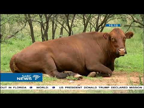 Free State Agriculture says the future is in hands of young farmers