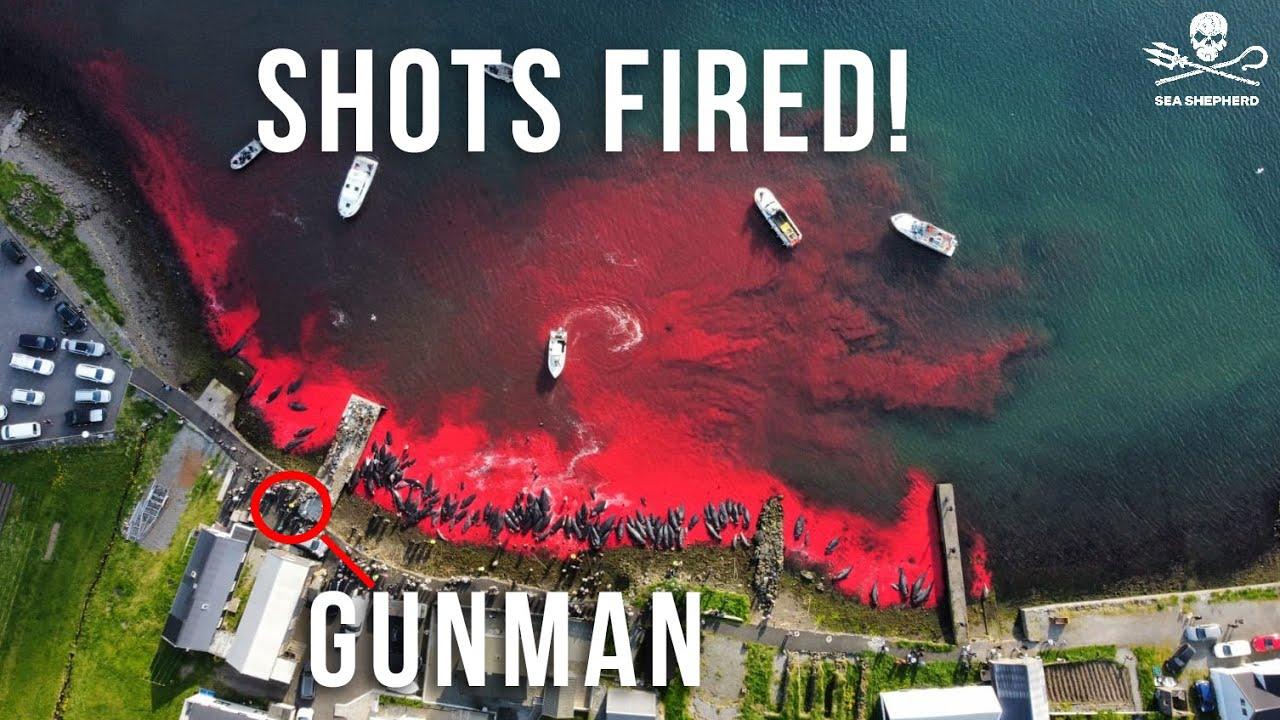 Shots fired: Sea Shepherd drone shot at in the Faroe Islands