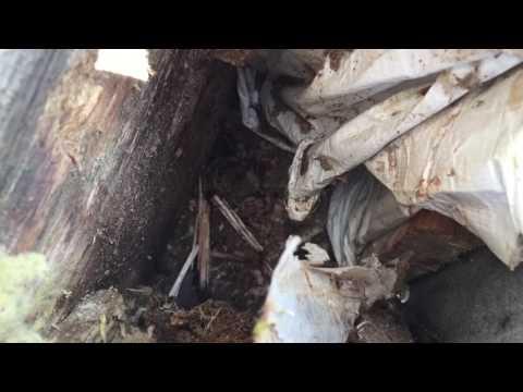 видео: Неправильно установлен оконный отлив. Печальные последствия.