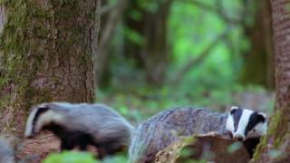 Give Badgers a Brake Campaign