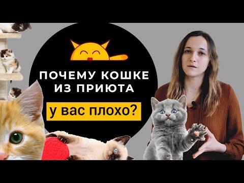 Берём Кошку Из Приюта: КАК ПОДГОТОВИТЬСЯ? Почему кошке у вас плохо?