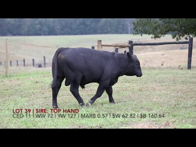 Edgewood Angus Lot 39