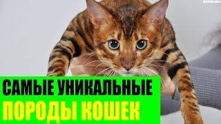 Самые уникальные породы кошек