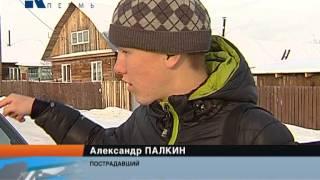 Собака напала на подростка(Кавказская овчарка напала на подростка. В пригороде Краснокамска едва не случилась трагедия. Со слов очеви..., 2013-12-04T14:09:04.000Z)