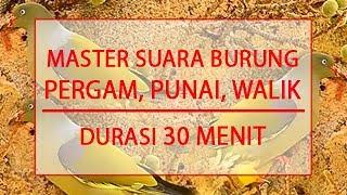vuclip MASTER SUARA BURUNG PERGAM, WALIK, PUNAI - DURASI 30 MENIT