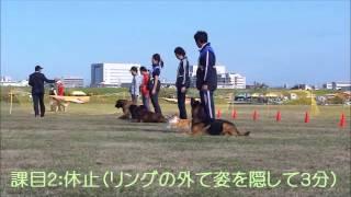 2012年11月3日 第83回JKC秋季訓練競技大会 ギュスターヴと...