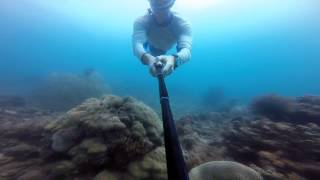 Freediving Lost Brains & Black Sun Forest - Tumbak lagoon, North Sulawesi