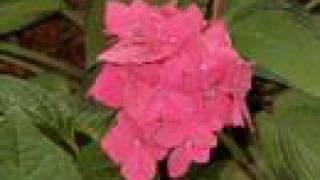 Garden Photographs Illinois Zone 5 Flower Annual Perennial