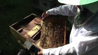 Пчеловодство весной(, 2015-05-21T05:10:20.000Z)