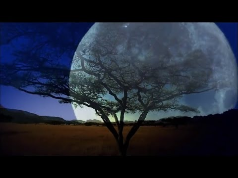 Mágica Alma da Natureza Animais - Piano Música Instrumental Relax