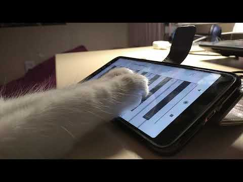 Cat plays the virtual piano