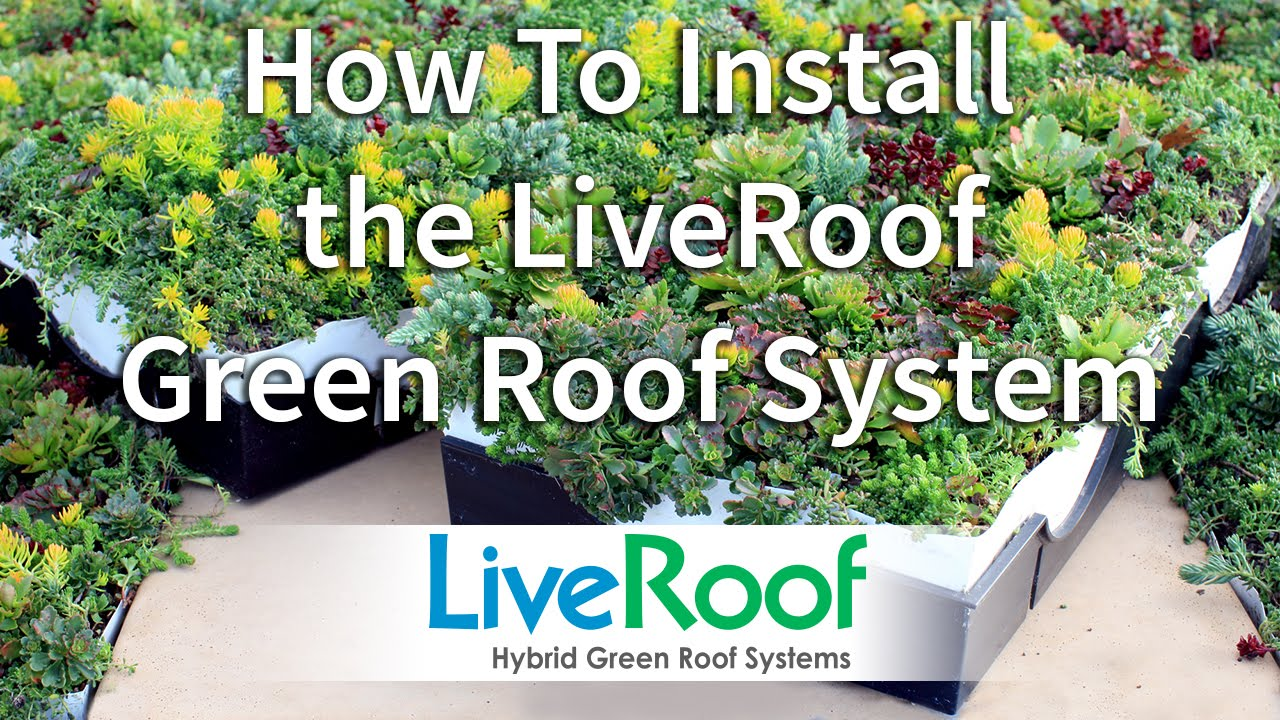 How To Install A Green Roof Using The LiveRoof System