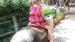 Fort Wayne Children's Zoo pony ride