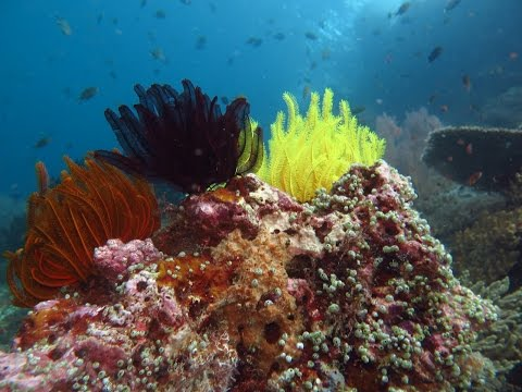 Raja Ampat - Paradise Underwater.